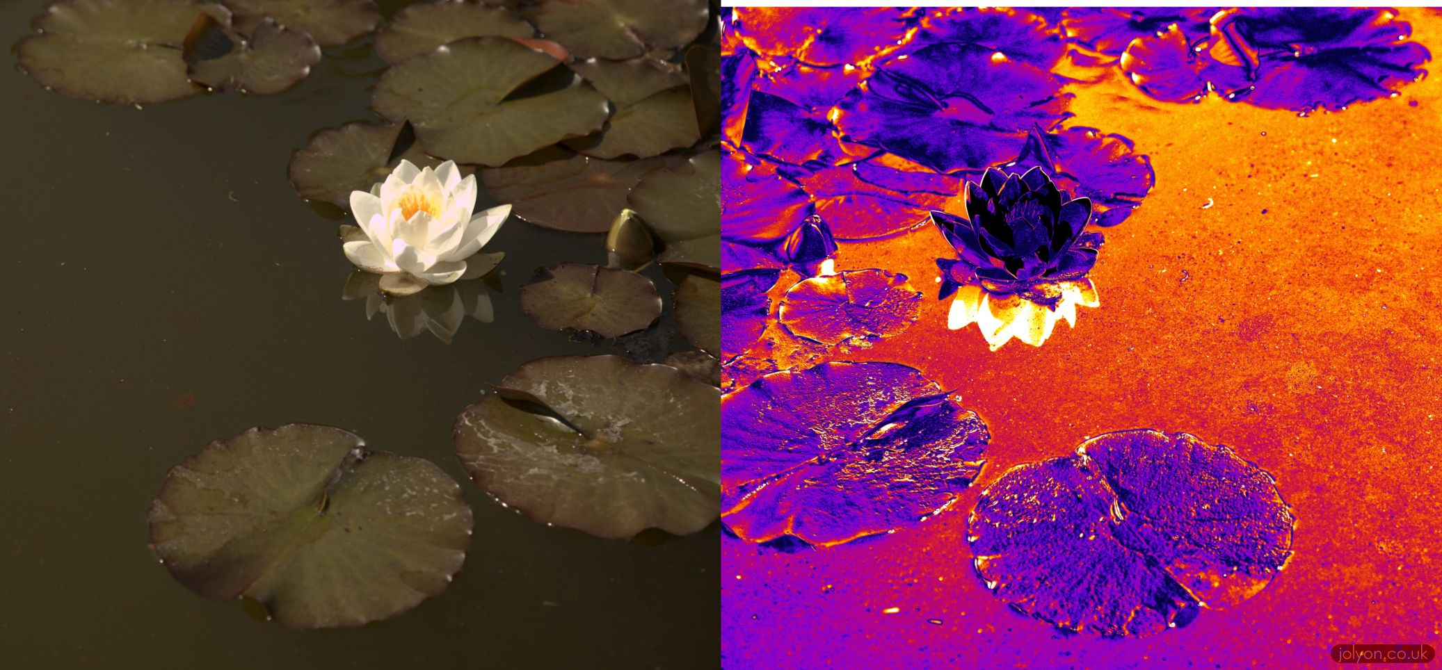 Dragonflies have complex colour vision, but they can also see polarised light. This image shows what the world can look like with polarisation vision.