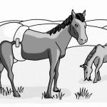 Horse Nappie
